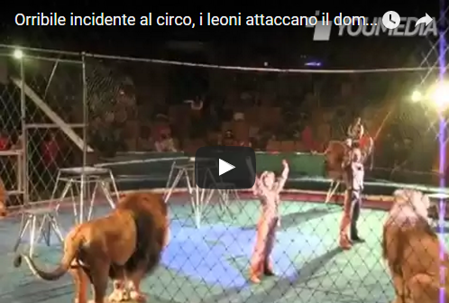 Orribile incidente al circo, i leoni attaccano il domatore